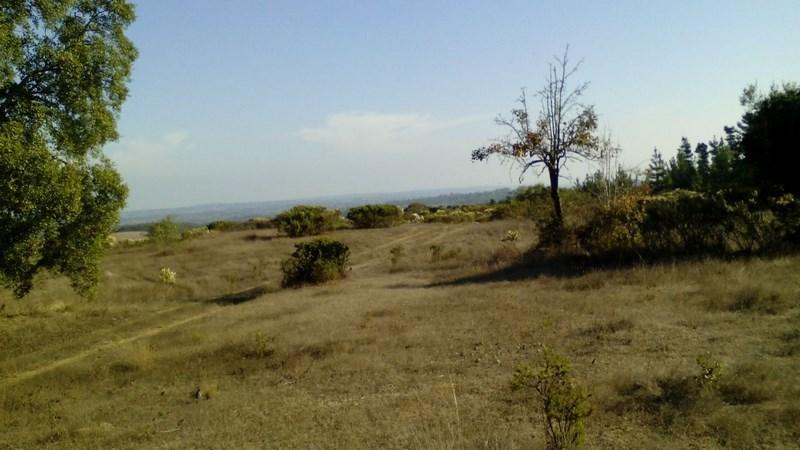 Terreno de 6 hectareas en Camino a las Dichas, Algarrobo.